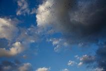a ton-o-birds