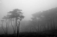 Big Fog on trees