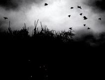 xmas birds