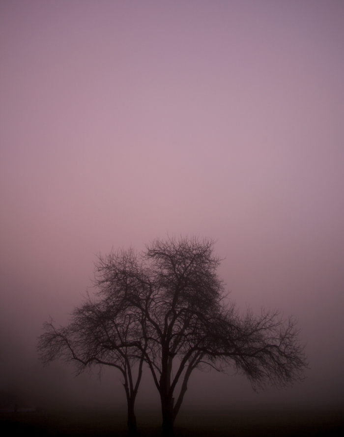another foggy pink tree