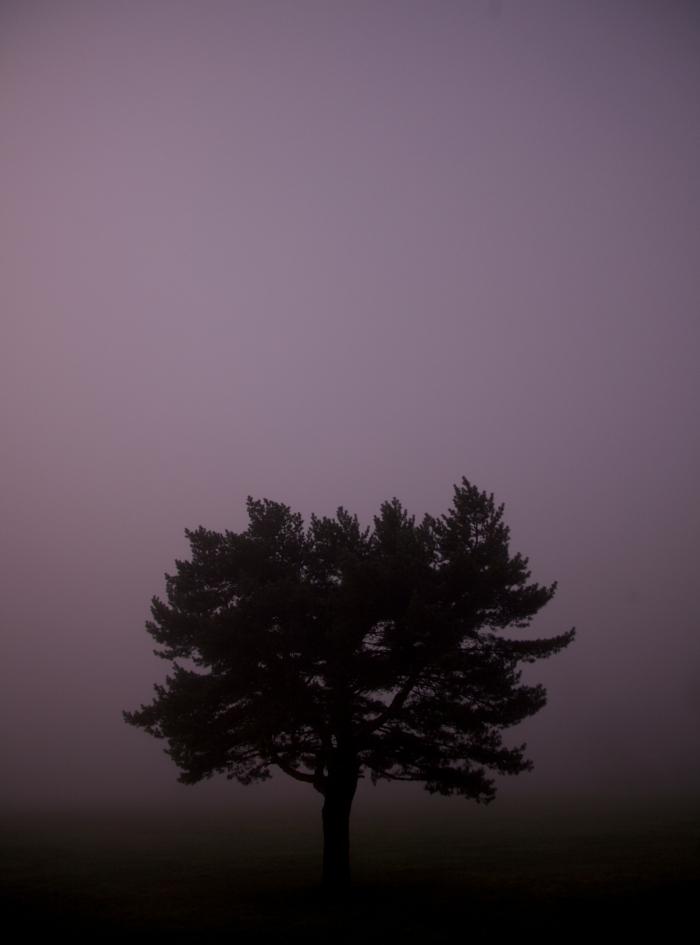 pink foggy tree