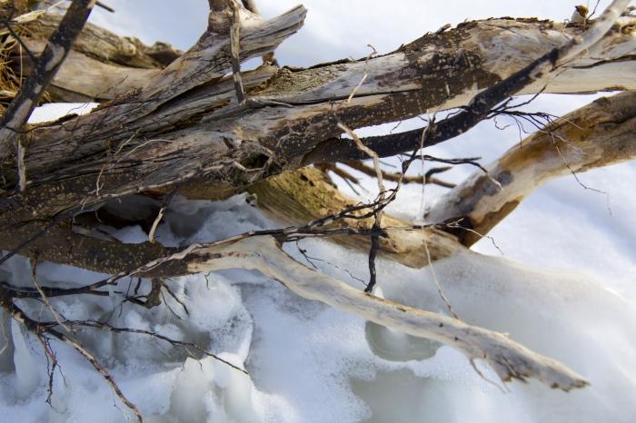 wood on a beach
