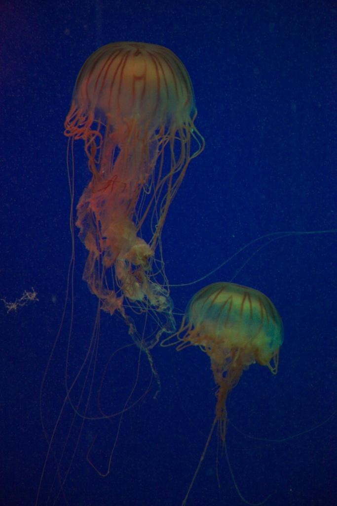 2 jellies