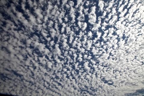 alto or cirro cumulus