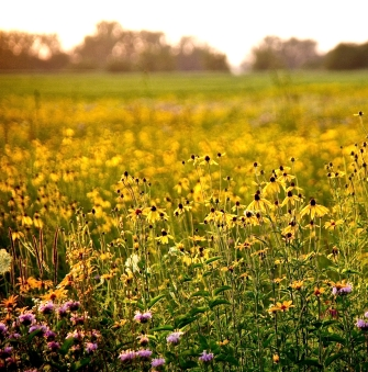 Fresh Meadow