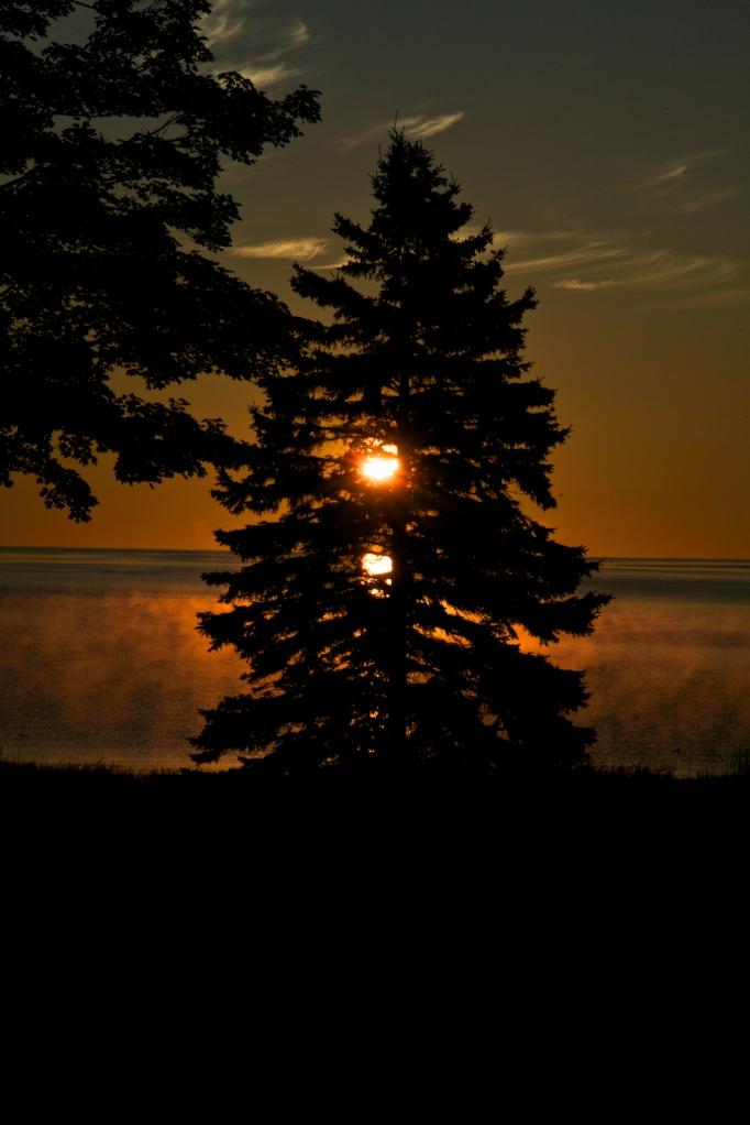 sunrise pine