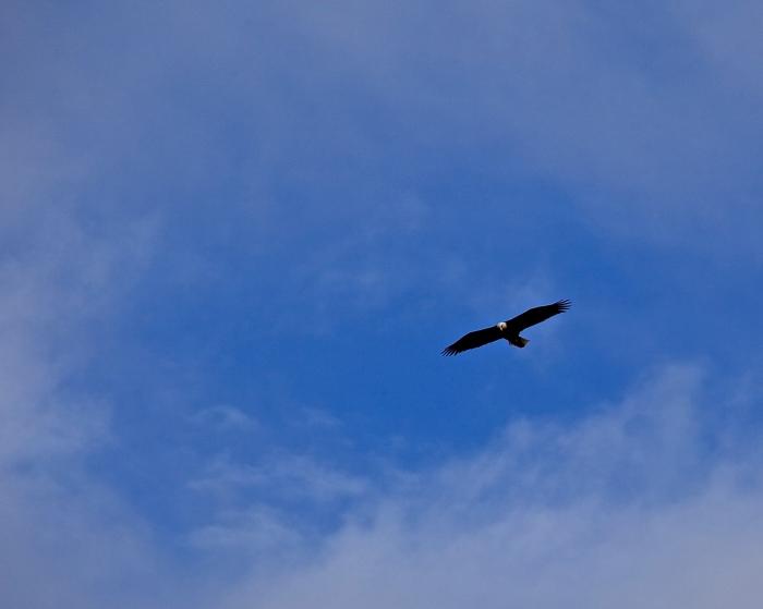 soaring free