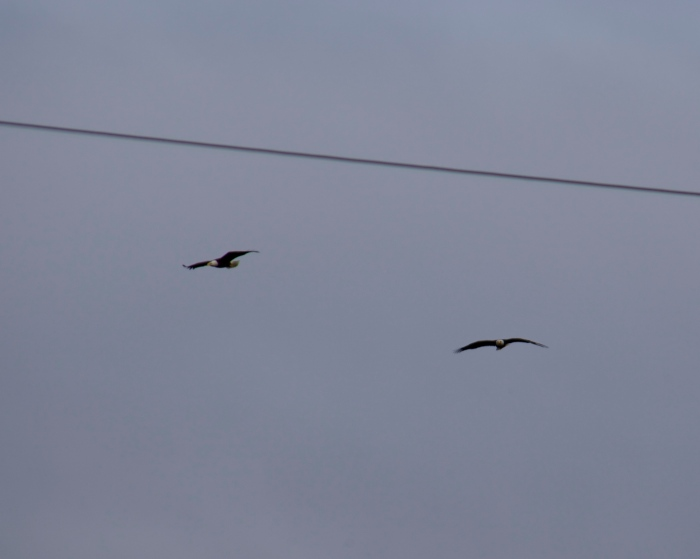 2 eagles!