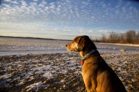 Juni enjoying the view