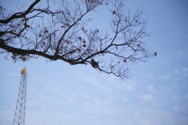 The owl is in the tree