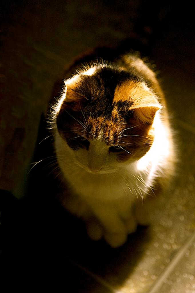 Opal Kitty