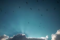 bird sky