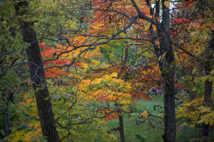 Fall Color 10/16/14