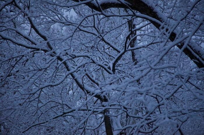 First Snow (2) 11/17/14