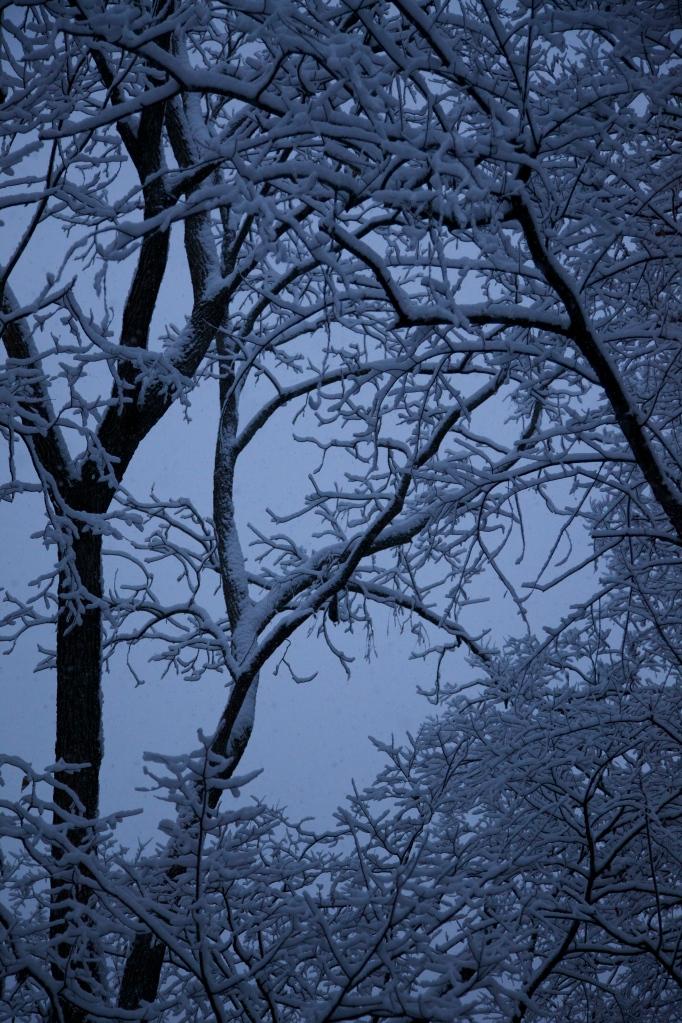 First Snow 11/17/14
